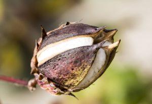 Saison des Abeilles coton biologique ecoresponsable vetements enfants