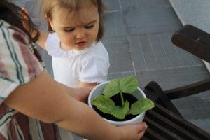 Saison des Abeilles body bébé col collerette eco responsable coton biologique made in europe