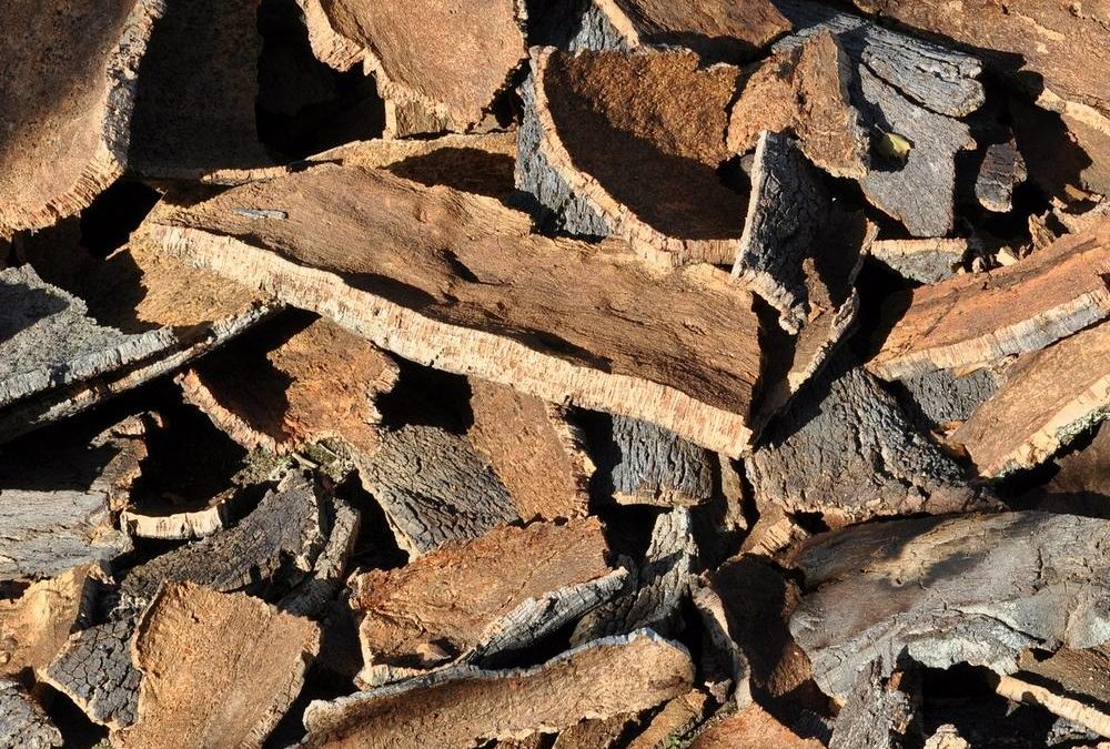 Le liège : Un matériau écologique et tendance !